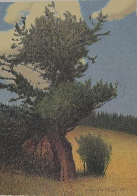 , 'BRISTLECONE PINE,' 2001, Fitzwater Street Gallery
