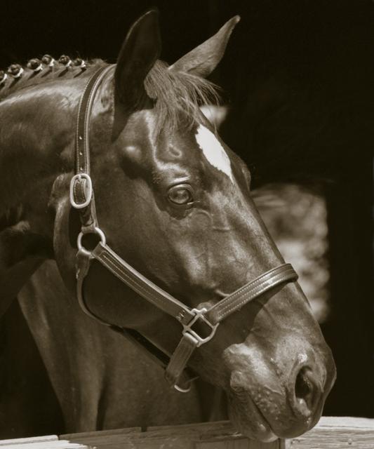 , 'Equine Profile ,' 2010, Dog & Horse Fine Art
