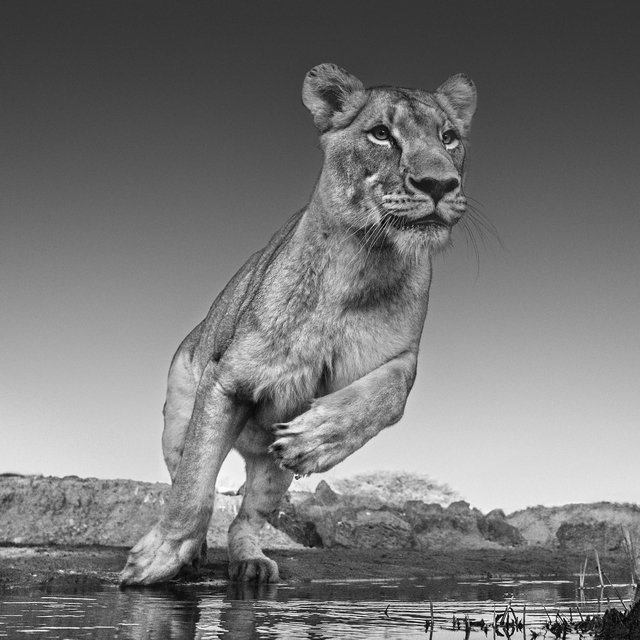 David Yarrow, 'Emma', 2017, Maddox Gallery
