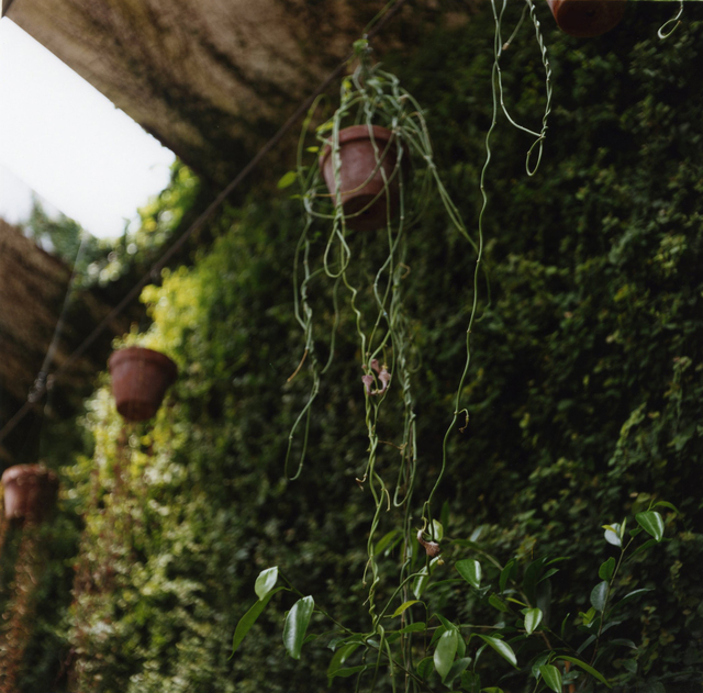 , 'Padua Botanical #15,' 2013, Newzones