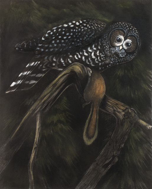 Tony Angell, 'Capture Spotted Owl', 2021, Drawing, Collage or other Work on Paper, Lithograph with hand painting, Foster/White Gallery