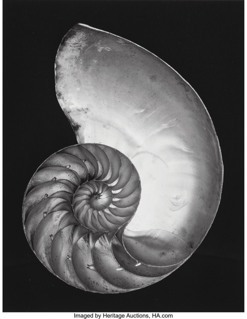 Edward Weston, 'Shell', 1927, Heritage Auctions