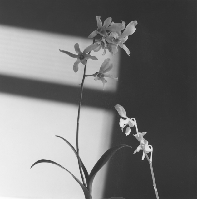 , 'Flower,' 1986, Galerie Thaddaeus Ropac
