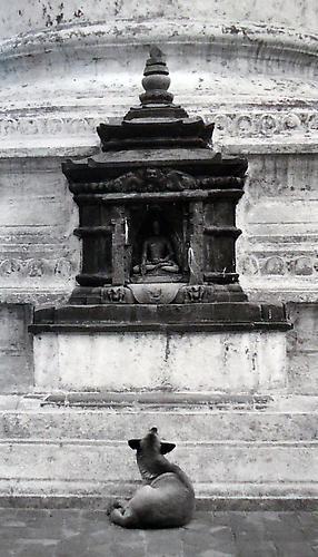 Pentti Sammallahti, 'Kathmandu, Nepal, (Dog looking up at Buddha)', 1994, Peter Fetterman Gallery