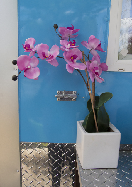 , 'Orchid Against Blue,' 2016, Carter Burden Gallery