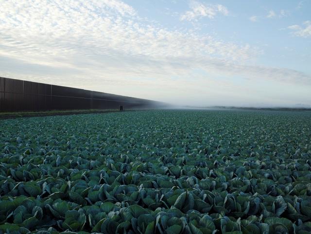 , 'Cabbage Crop Near Brownsville, Texas,' 2015, Fraenkel Gallery