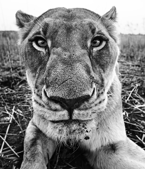 David Yarrow, 'The Hunger Games', Art Angels