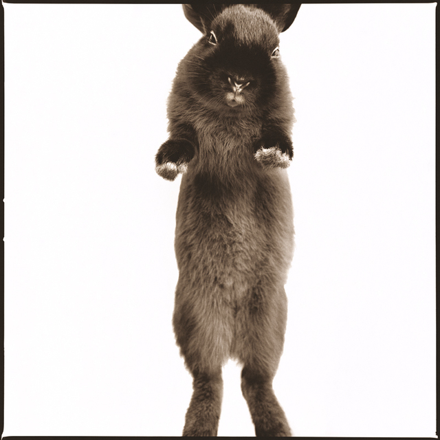 Nine Francois, 'Rabbit I', Weston Gallery