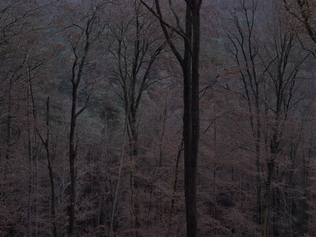 Michael Lange, 'WALD   Landscapes of Memory#6254', 2011, Photography, Archival Pigment Ink Print, photo-eye Gallery