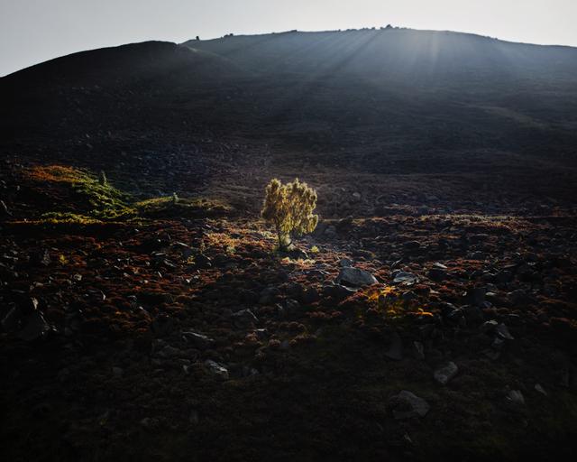 , 'Stable Stones Brow, Saddleworth Moor,' 2015, ElliottHalls