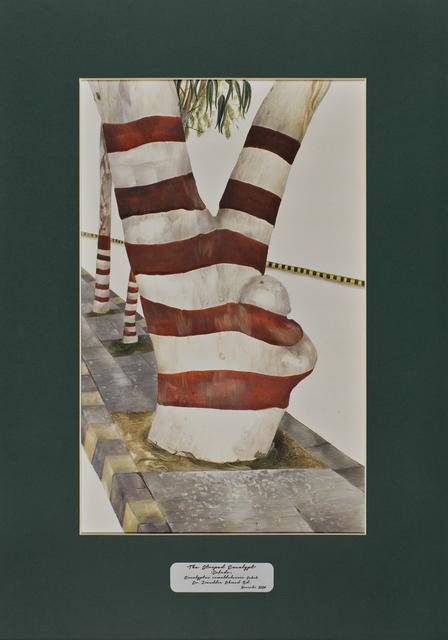 David Chalmers Alesworth, 'Trees of Pakistan - The Striped Eucalypt, Safeda', 2013-2014, GALLERYSKE