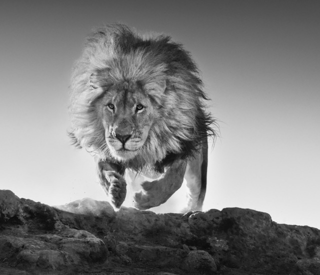 David Yarrow, 'Hairspray', 2017, Isabella Garrucho Fine Art