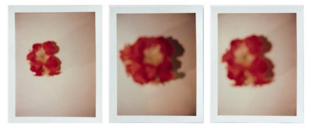 Andy Warhol, 'Andy Warhol, Set of Three Polaroid Photograph of Flowers', 1982, Hedges Projects