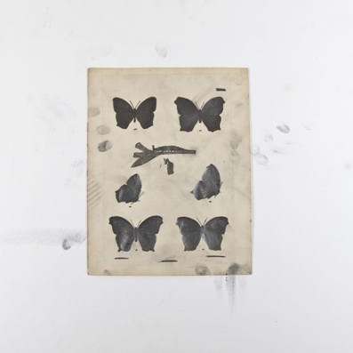 , 'Black butterflies,' , MC2Gallery