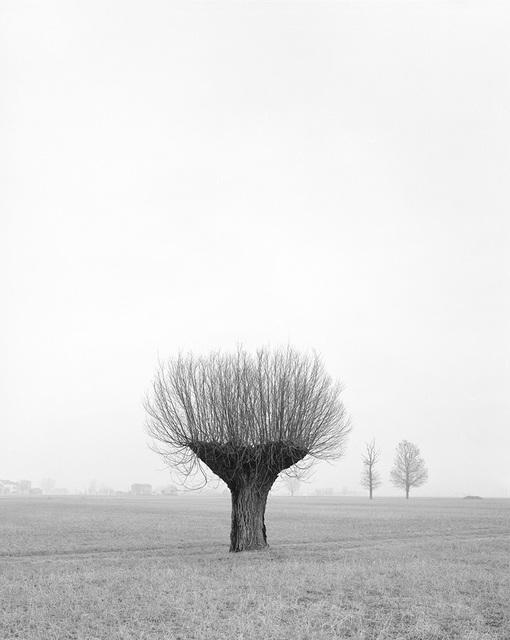 , 'Untitled 016, Questa Pianura series,' 2015, Galerie Les filles du calvaire