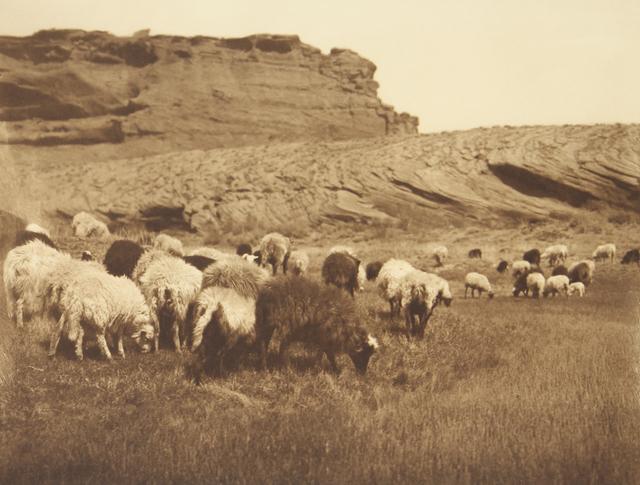 , 'Navanho Flocks,' 1907-1930, Empty Gallery
