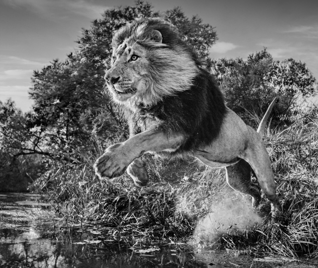 David Yarrow, 'First Down', 2020, Photography, Archival Pigment Print, Maddox Gallery