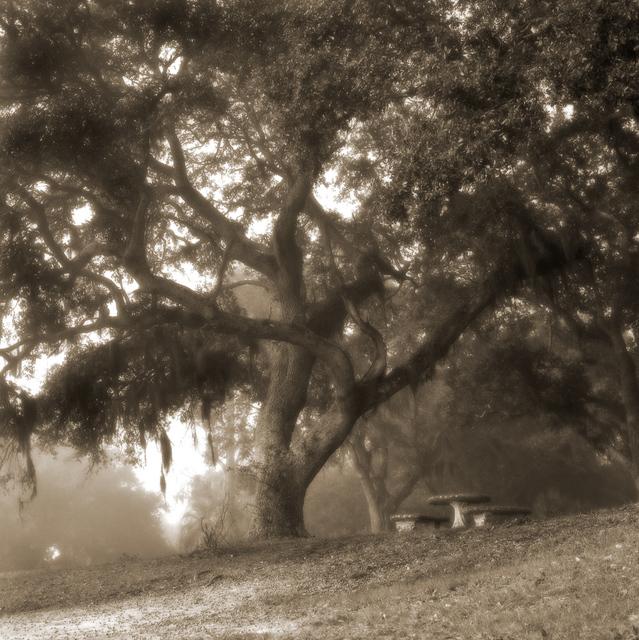 , 'Brignac Estate Oak,'  2000-2005, Paraphé