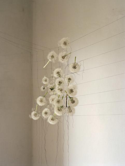 Elspeth Diederix, 'Dandelions', 2007, Casemore Kirkeby