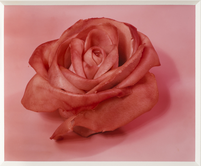, 'Single Rose,' 1997, National Museum of Women in the Arts