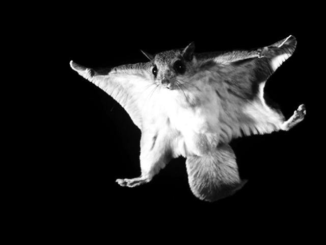 , 'Drone,' 2017, Roger Katwijk