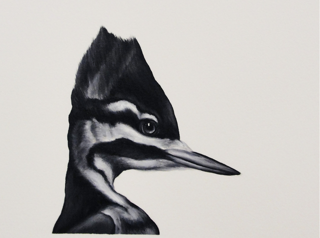 Shelley Reed, 'Ivory-billed Woodpecker', Painting, Visions West Contemporary