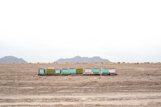 , 'Siete Cerros 09,' 2014, Celaya Brothers Gallery