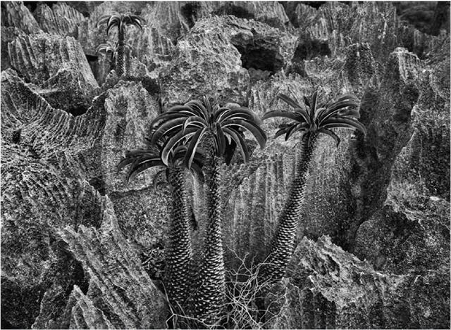 , 'Tsingy of Bemaraha National Park,' 2010, Sundaram Tagore Gallery