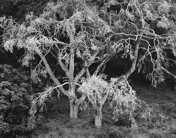 Chip Hooper, 'Twin Oaks', 2000, Photography, Silver print, Robert Mann Gallery