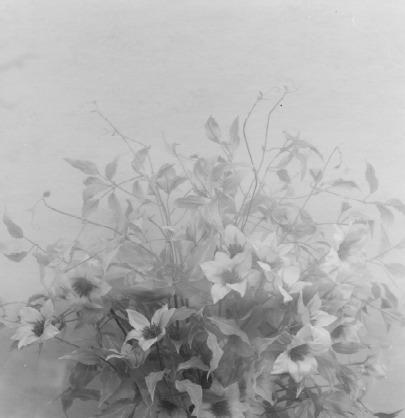 Frauke Eigen, 'Ikebana', 2008, Atlas Gallery