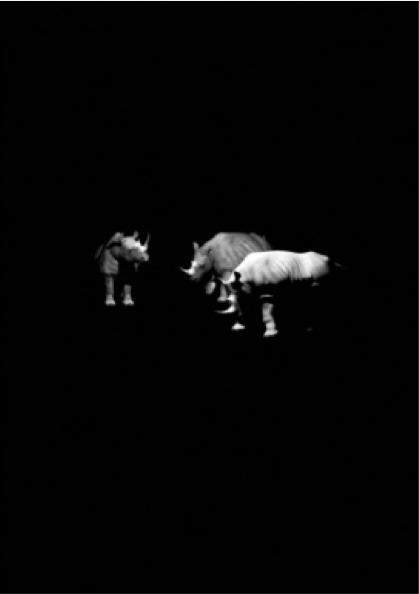 , 'Three Rhinos,' 2015, Pg Art Gallery