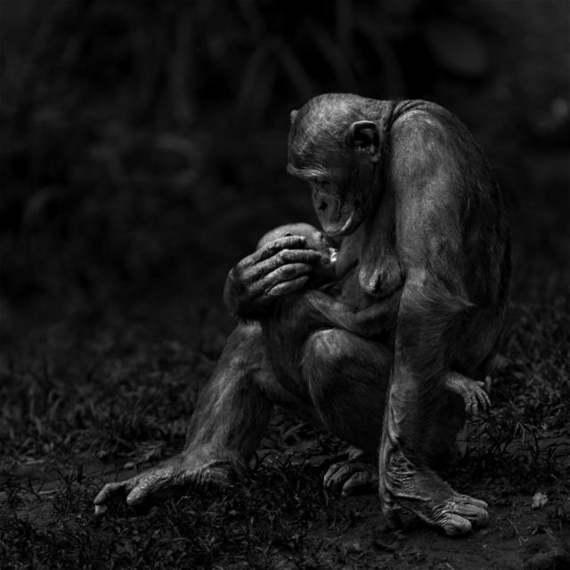 , 'Serie Primates,' 2016, Flecha