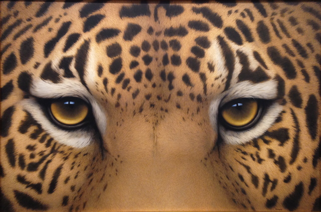 , 'Jaguar Eyes,' 2016, J. Cacciola Gallery