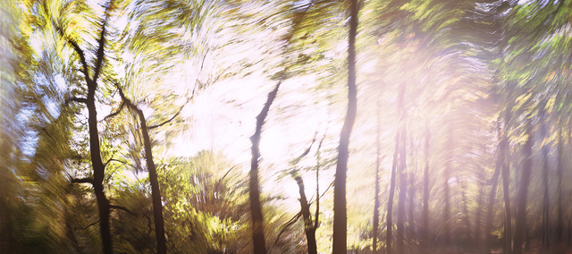 Dominic Pote, 'Hopwas Woods', 2014, Photography, Archival prints, Maggio Art Consultancy