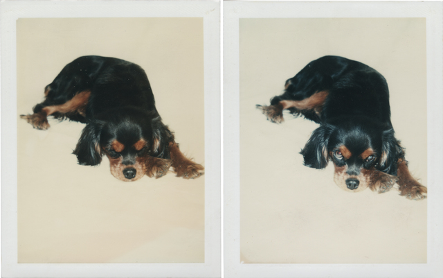 Andy Warhol, 'Dog', 1976, Photography, Two unique polaroid print, Christie's Warhol Sale