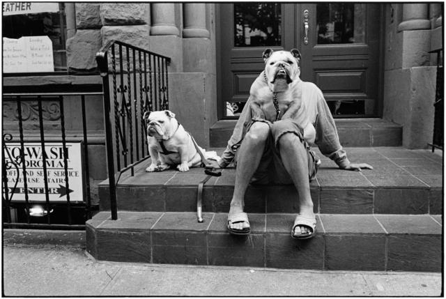 Elliott Erwitt, 'New York City, 2000 (Bulldogs)', 2000, Holden Luntz Gallery