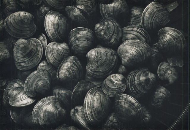 Ron Stark, 'Untitled (Still Life with Clams)', 1972, Washington Color