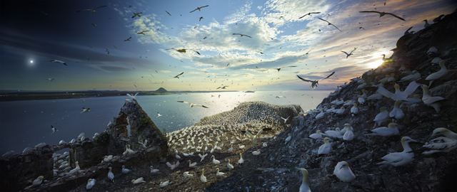 Stephen Wilkes, 'Northern Gannets, Bass Rock, Scotland', 2017, Bryce Wolkowitz Gallery