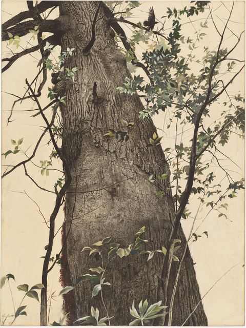 Andrew Wyeth, 'The Oak', 1944, Painting, Watercolor on cardboard, Museo Thyssen-Bornemisza