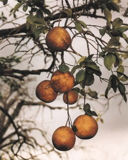 , 'Orange Grove #4 1/5,' 2004, Gagosian