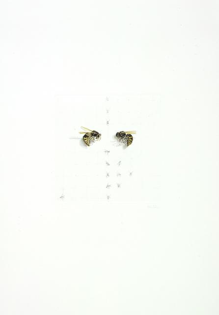 , 'hornets,' 2012, Artdepot