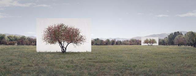, 'Tree...#7,' 2014, Yossi Milo Gallery