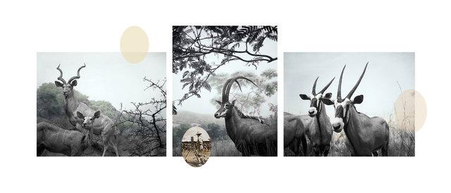 Ian van Coller, 'Antelope', 2003, jdc Fine Art