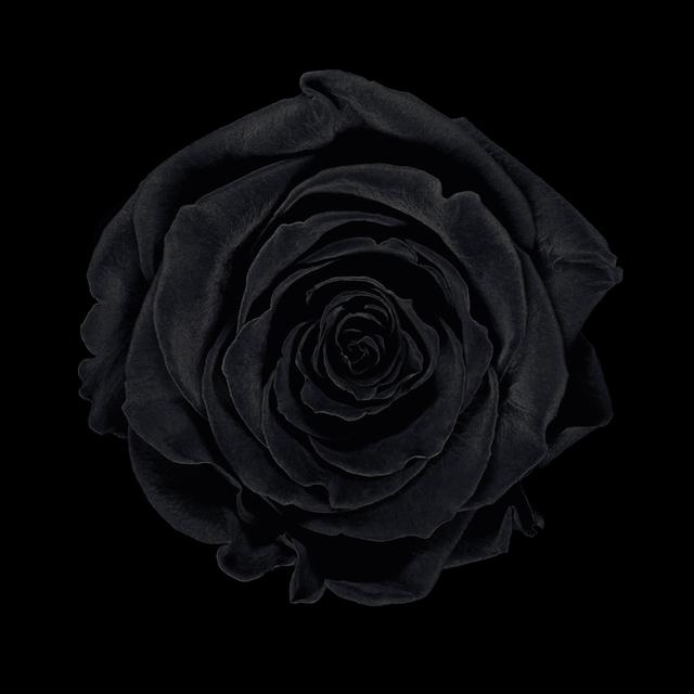 , 'MONOCHROME - Rose noire,' 2011, Galerie Patrick Gutknecht