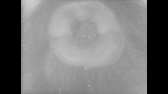 , 'Un cube se transforme en cercle par la chaleur de Cardena no 2,' 1973-1974, Instituto de Visión