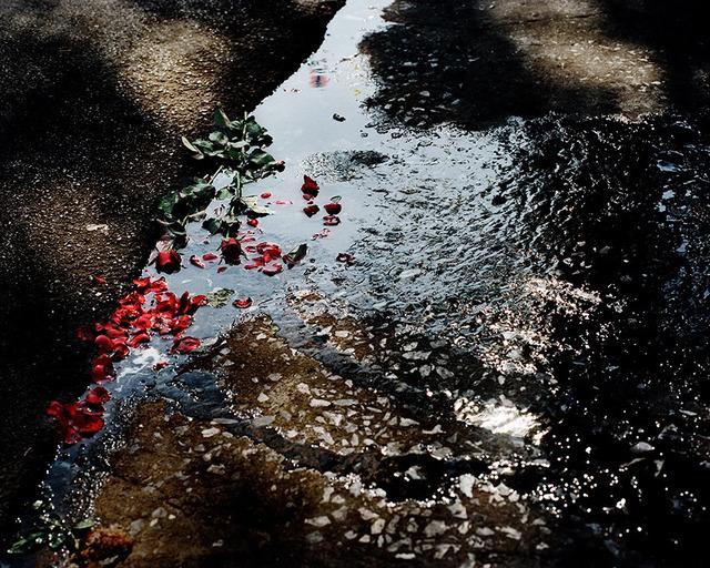 David Drebin, 'Roses', 2012, Isabella Garrucho Fine Art