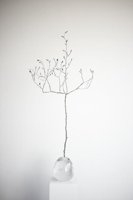 , 'Seed I (Asia) ,' 2017, MARS