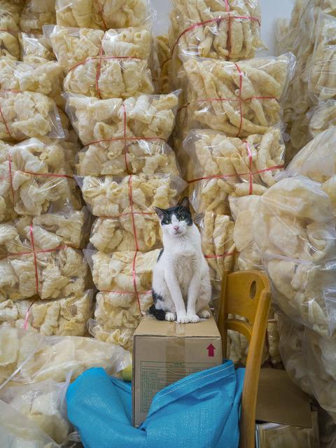 , 'HK SHOP CATS #25,' 2015, Blue Lotus Gallery