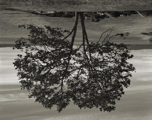 , 'Gary Oak, Galiano Island,' 2012, Istanbul Modern