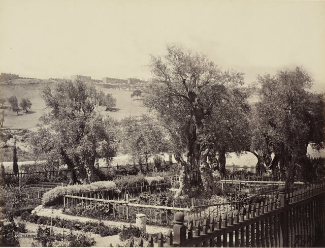 , 'The Garden of Gethsemane [Jerusalem],' 2 April 1862, Royal Collection Trust